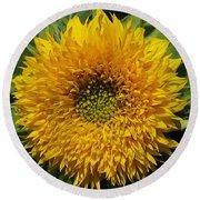 Dwarf Sunflower Named Teddy Bear Round Beach Towel