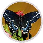 Eastern Black Swallowtail Round Beach Towel