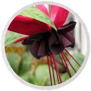 Fuchsia Named Roesse Blacky Round Beach Towel