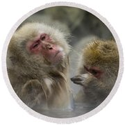 Japanese Macaques Round Beach Towel