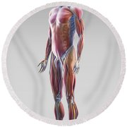 Muscle System Round Beach Towel