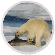 Polar Bear With Fresh Kill Round Beach Towel