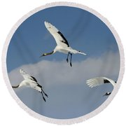 Red-crowned Cranes Round Beach Towel