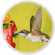 Ruby-throated Hummingbird Female Round Beach Towel