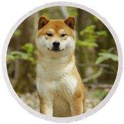 Shiba Inu Dog Round Beach Towel