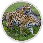 Siberian Tigers, China Round Beach Towel