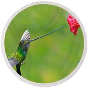 Sword-billed Hummingbird Round Beach Towel