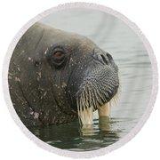 Walrus Round Beach Towel