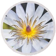 Water Lily  6 Round Beach Towel