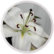 White Lily In Macro Round Beach Towel