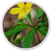Yellow Wood Anemone Round Beach Towel