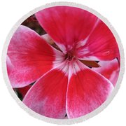 Zonal Geranium Named Candy Fantasy Kiss Round Beach Towel