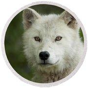 Arctic Wolf Pup Round Beach Towel