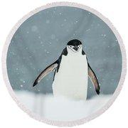 Chinstrap Penguin  Pygoscelis Round Beach Towel