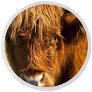 Highland Cow Round Beach Towel by Brian Jannsen