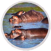 Hippopotamus In River. Serengeti. Tanzania Round Beach Towel
