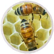 Honey Bees In Hive Round Beach Towel
