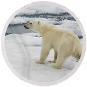Polar Bear Crossing Ice Floe Round Beach Towel