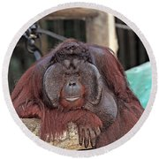 Portrait Of A Large Male Orangutan Round Beach Towel
