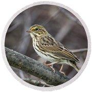 Savannah Sparrow Round Beach Towel