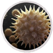 Sunflower Pollen Round Beach Towel