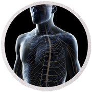 The Nerves Of The Upper Body Round Beach Towel