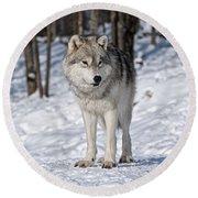 Arctic Wolf Round Beach Towel