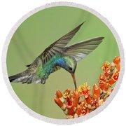 Broad-billed Hummingbird Round Beach Towel