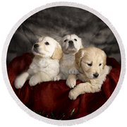Festive Puppies Round Beach Towel