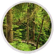 Path In Temperate Rainforest Round Beach Towel by Elena Elisseeva