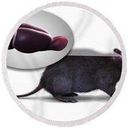 Rat Brain Anatomy Round Beach Towel