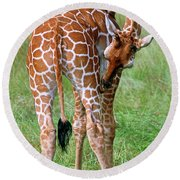 Reticulated Giraffe Round Beach Towel