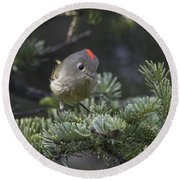 Rubycrowned Kinglet Round Beach Towel