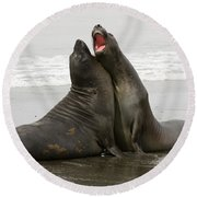 Southern Elephant Seal Round Beach Towel