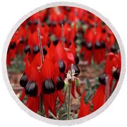 Sturt's Desert Pea Outback South Australia Round Beach Towel