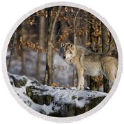 Timber Wolf Pictures Round Beach Towel by Wolves Only