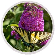 Yellow Tiger Swallowtail Papilio Glaucus Butterfly  Round Beach Towel
