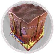 Anatomy Of Human Skin Round Beach Towel