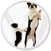 Boston Terrier Round Beach Towel