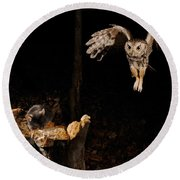 Eastern Screech Owl Round Beach Towel