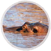 Hippopotamus In River. Serengeti. Tanzania Round Beach Towel