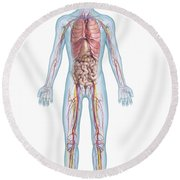 Internal Anatomy Pre-adolescent Round Beach Towel