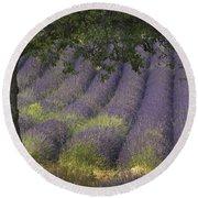 Lavender Field, France Round Beach Towel