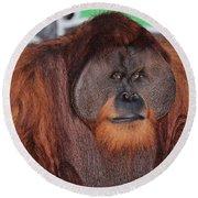 Portrait Of A Large Male Orangutan Round Beach Towel