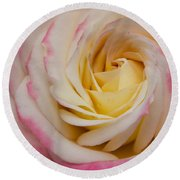 A Beautiful Pink Rose In Summertime Round Beach Towel