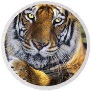 A Bengal Tiger Portrait Endangered Species Wildlife Rescue Round Beach Towel