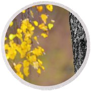 A Birch At The Lake Round Beach Towel