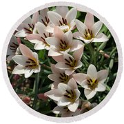 A Bouquet Of Miniature Tulips Celebrating The Spring Season - Vertical Round Beach Towel