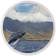 A Breaching Humpback Whale  Megaptera Round Beach Towel