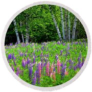A Breathless Moment Among Lupine Round Beach Towel
